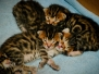 Kittens - The Early Weeks