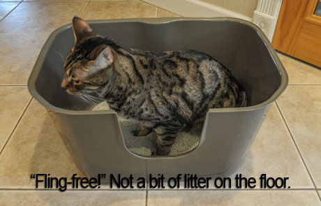 With NVR Miss Litterbox - no more litter on floor!