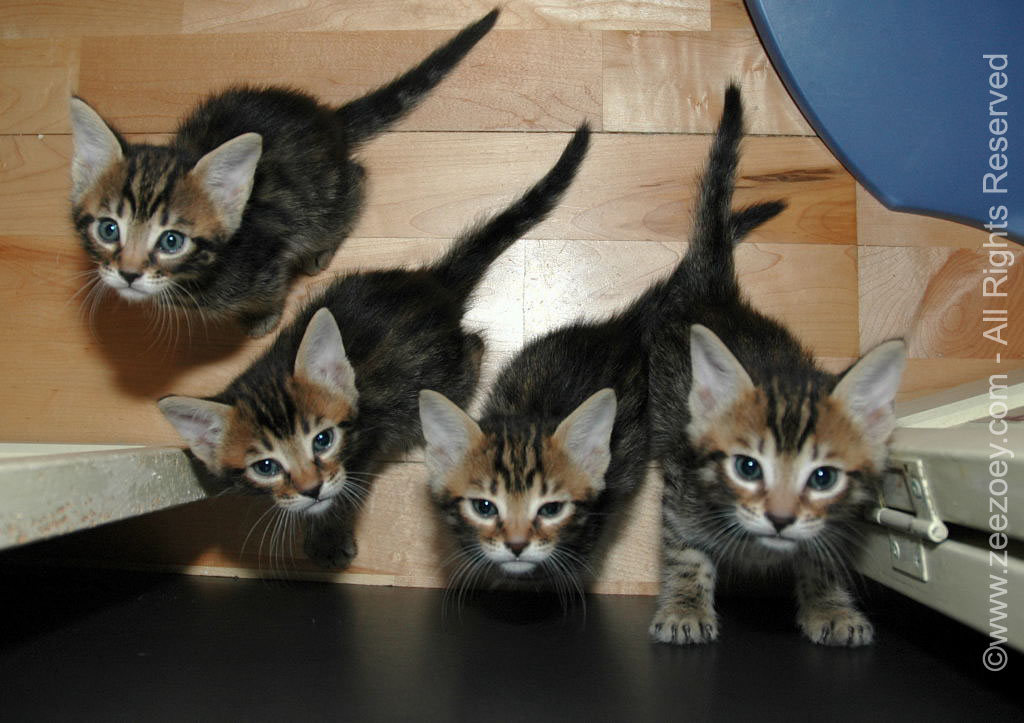 Cat overpopulation is a serious issue that could be significantly managed with responsible spay/neuter practices.