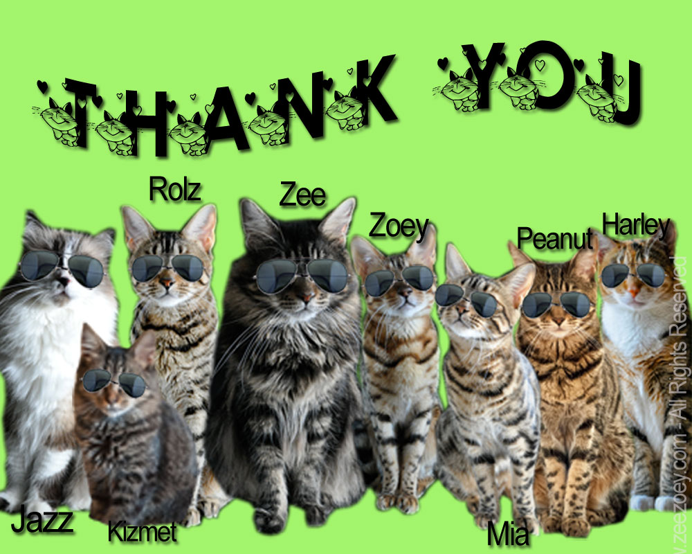 cats-for-thank-you