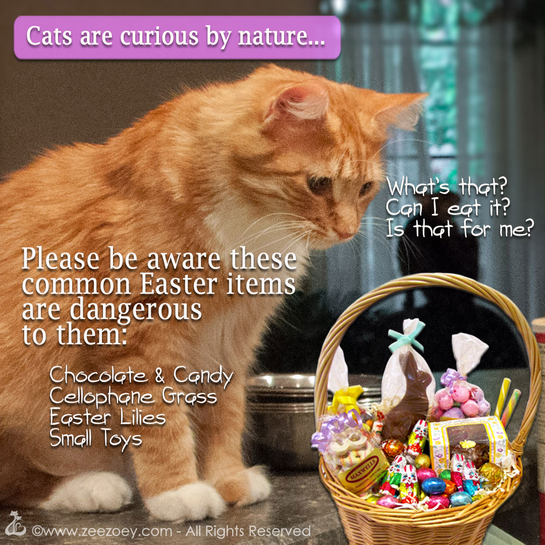 Chocolate bunnies and cellophane grass can hurt a cat if ingested