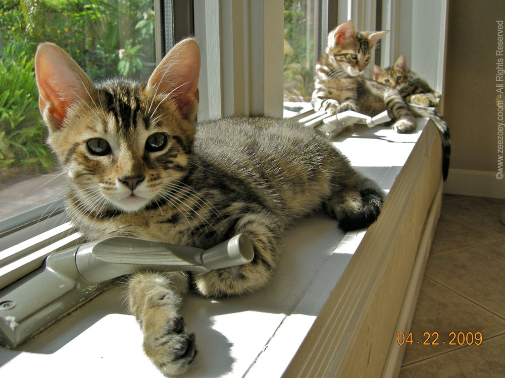 Peanut,-Rolz,-and-Mia-on-windowsill