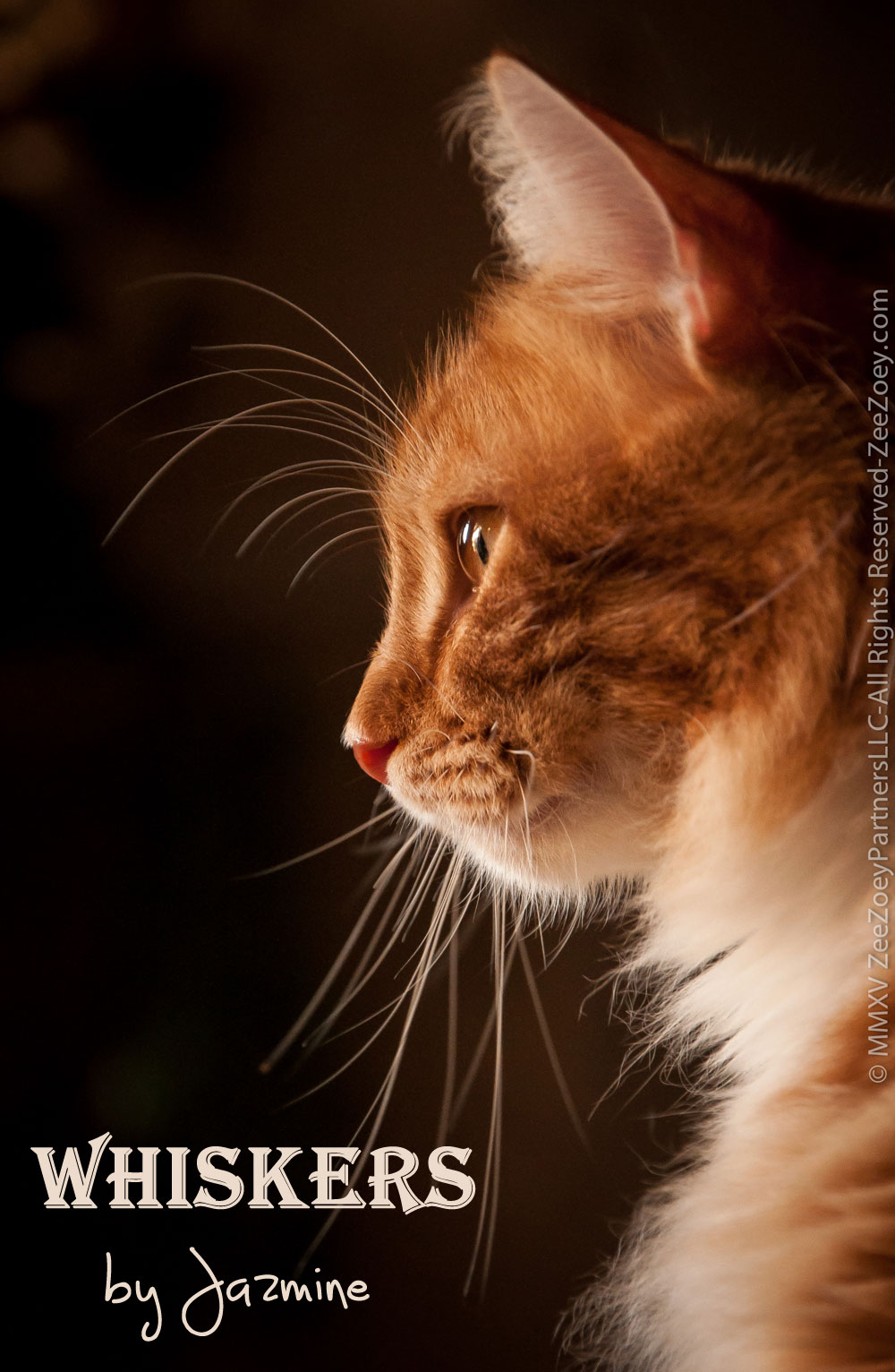 wednesday-whiskers