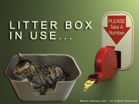 Litter Box in use