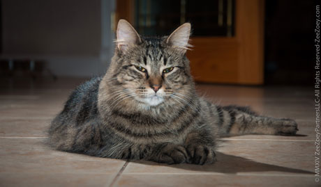 Replacing carpeting with tile floors can dramatically reduce chances of getting cat allergies