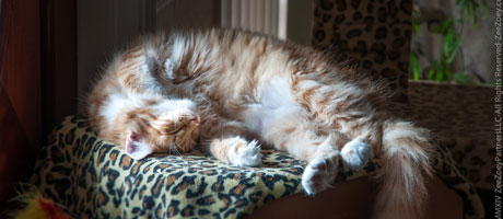 Washing cat bedding frequently can help to reduce dander and cat allergies in a home. Consider using DeMite washing solution in the laundry.