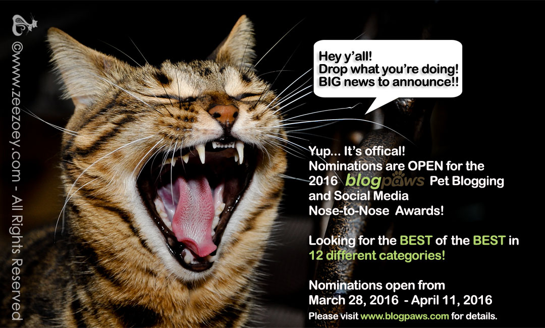 Nominations are open for the 2016 BlogPaws Pet Blogging and Social Media Awards