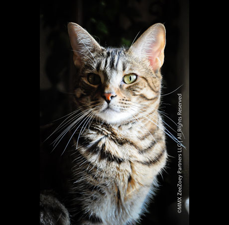 Wordless Wednesday…. Reflections From an Aloof Cat | Zee ...
