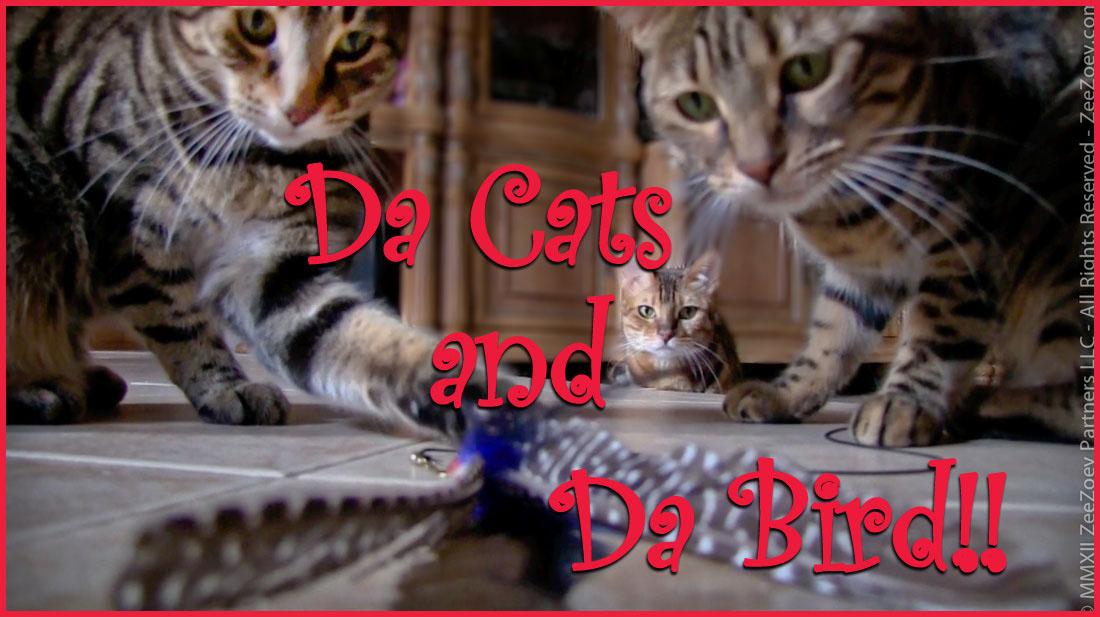 The importance of playtime from da cats da bird zee for Jackson galaxy da bird