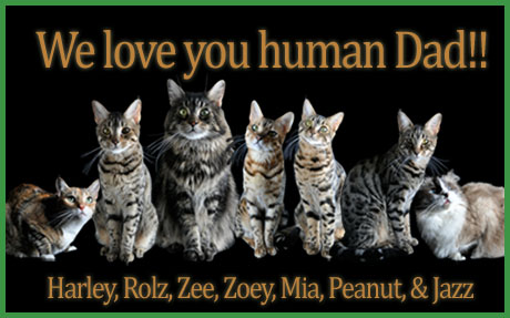 Happy fathers day dear human zee zoeys cat chronicles when dan and i first started dating many moons ago his first knock on the door to pick me up was probably a bit unnerving to say the least sciox Gallery
