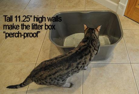 "NVR Miss Litterbox is ""perch-proof"""