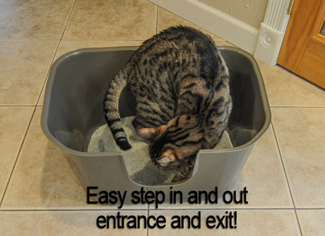 NVR Miss Litterbox is easy to get in and out of