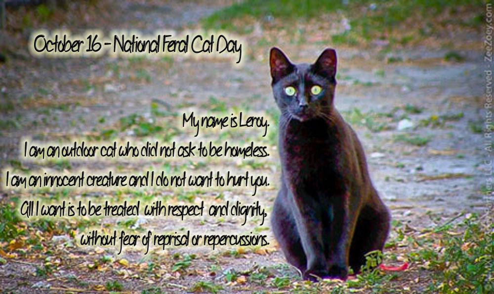 Feral Cat Australia History
