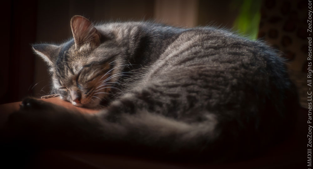 Little-Kizzy-nap