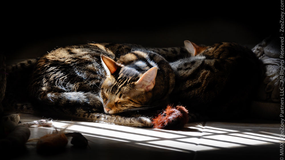 Spaying a female cat makes her happier by removing her heat cycle which can make her loud and uncomfortable.