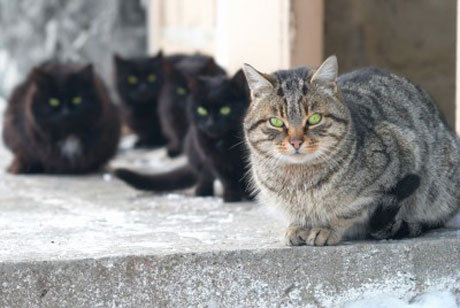 It has been stated that a pair of cats can be responsible for 420,000 kitten in 7 years, but that number has been greatly exaggerated and is closer to 5000.