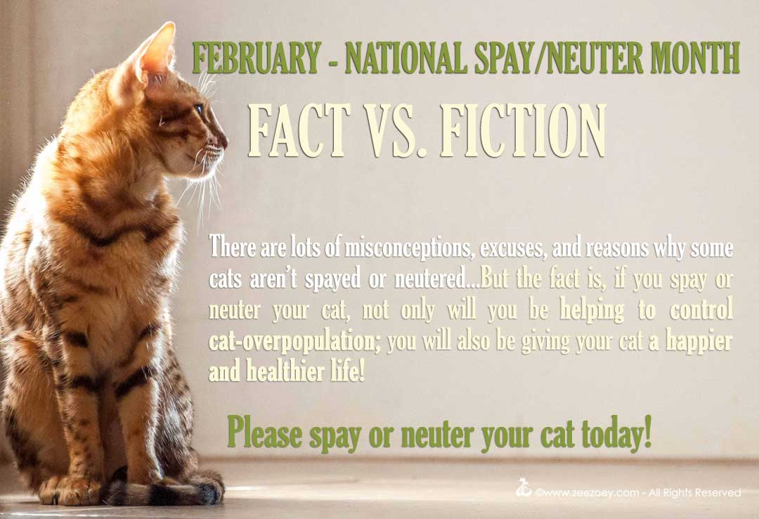 Clearing up the myths, confusion, misconceptions, and excuses why people don't spay or neuter their cat