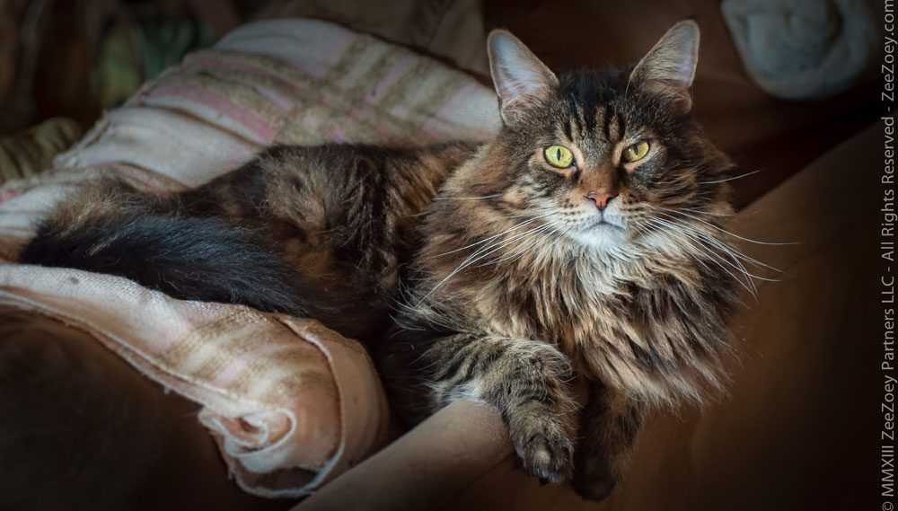 Neutering your male cat can greatly reduce territorial and aggression issues and help to decrease the chances of him spraying walls and furniture with urine