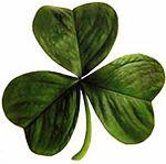 Irish_clover