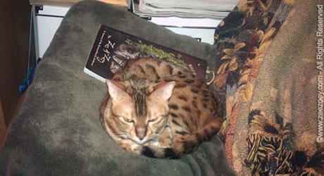 Zoey-reading