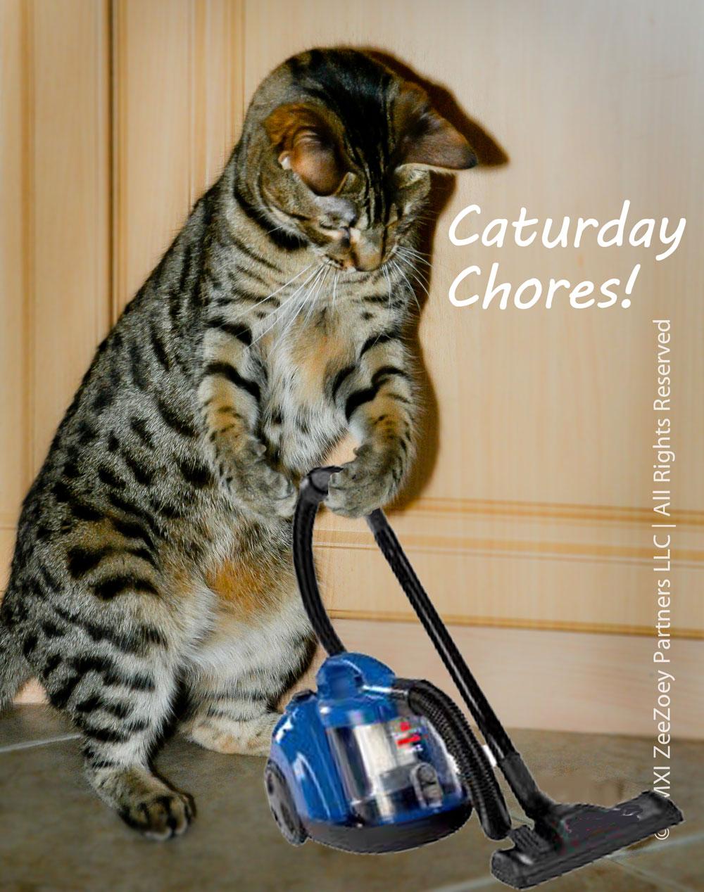 caturday-chores