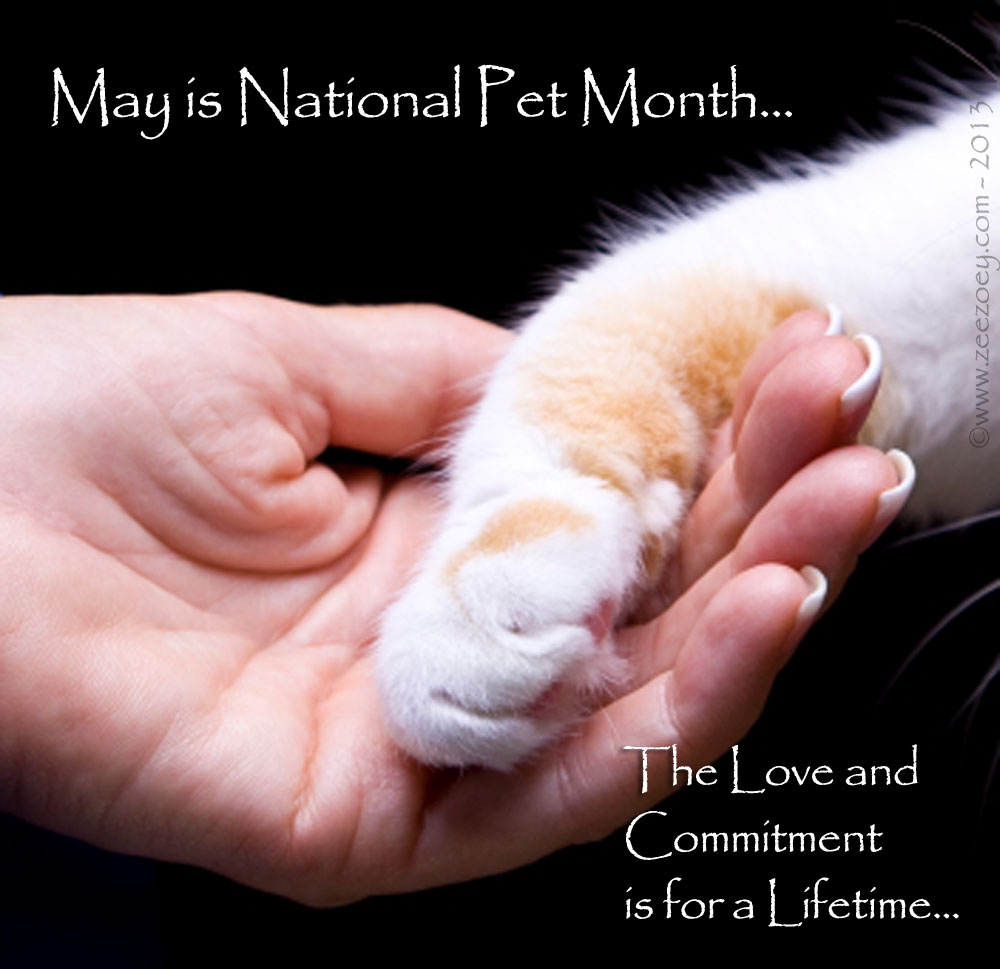 Be Kind to Animals Week and National Pet Month | Zee ...