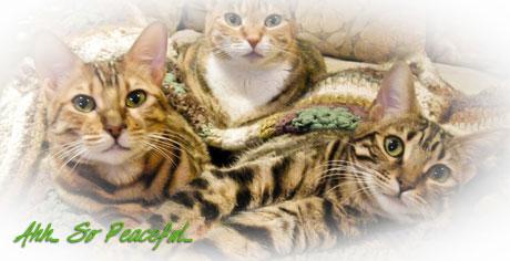 KittiesChecks06