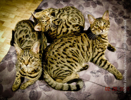 cats-on-bed-kitens