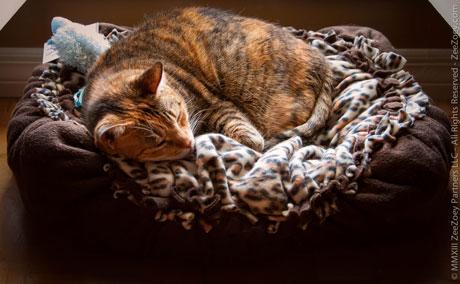 Harley-cat-naps