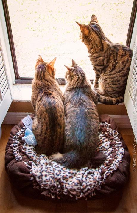 Sharing-the-cat-nap
