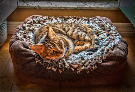 mia-cats-love-naps