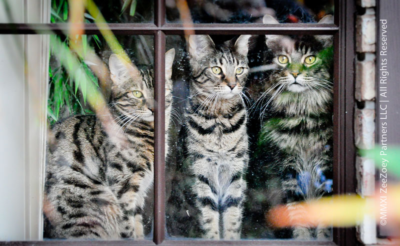 rainy-cats