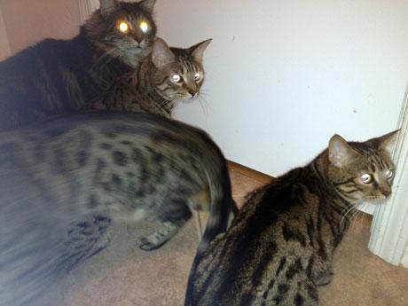 cats-lurking
