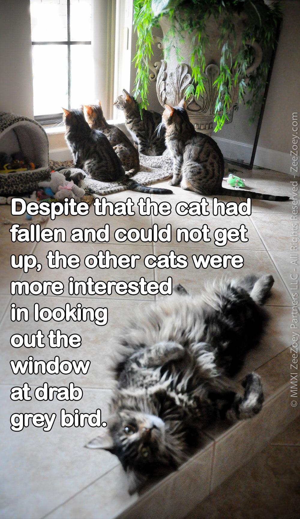 fallen-cat