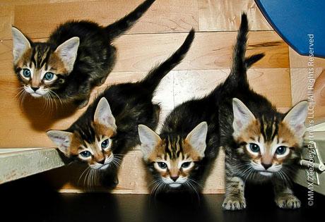 All-Kittens