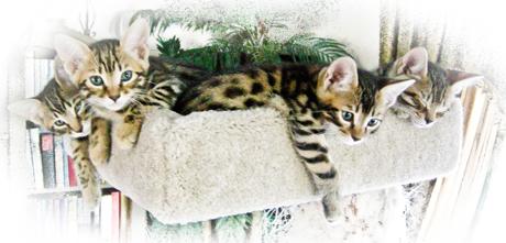 Kittens on cathouse