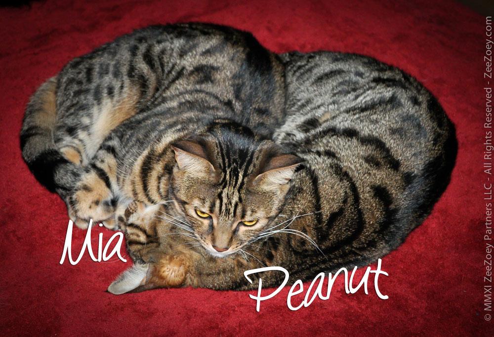 Mia-and-Peanut-BR
