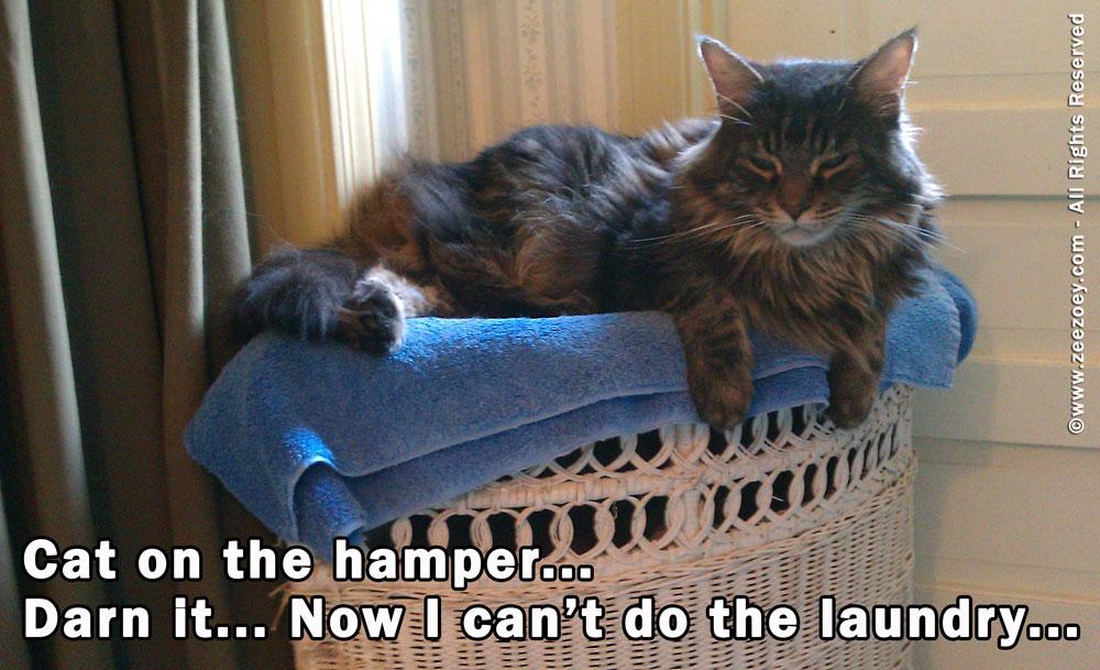 cat-on-hamper