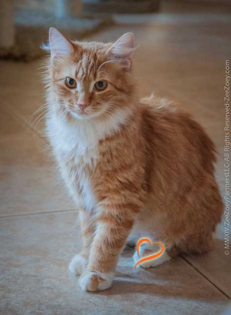 Cats that have distinguishing heart shape markings