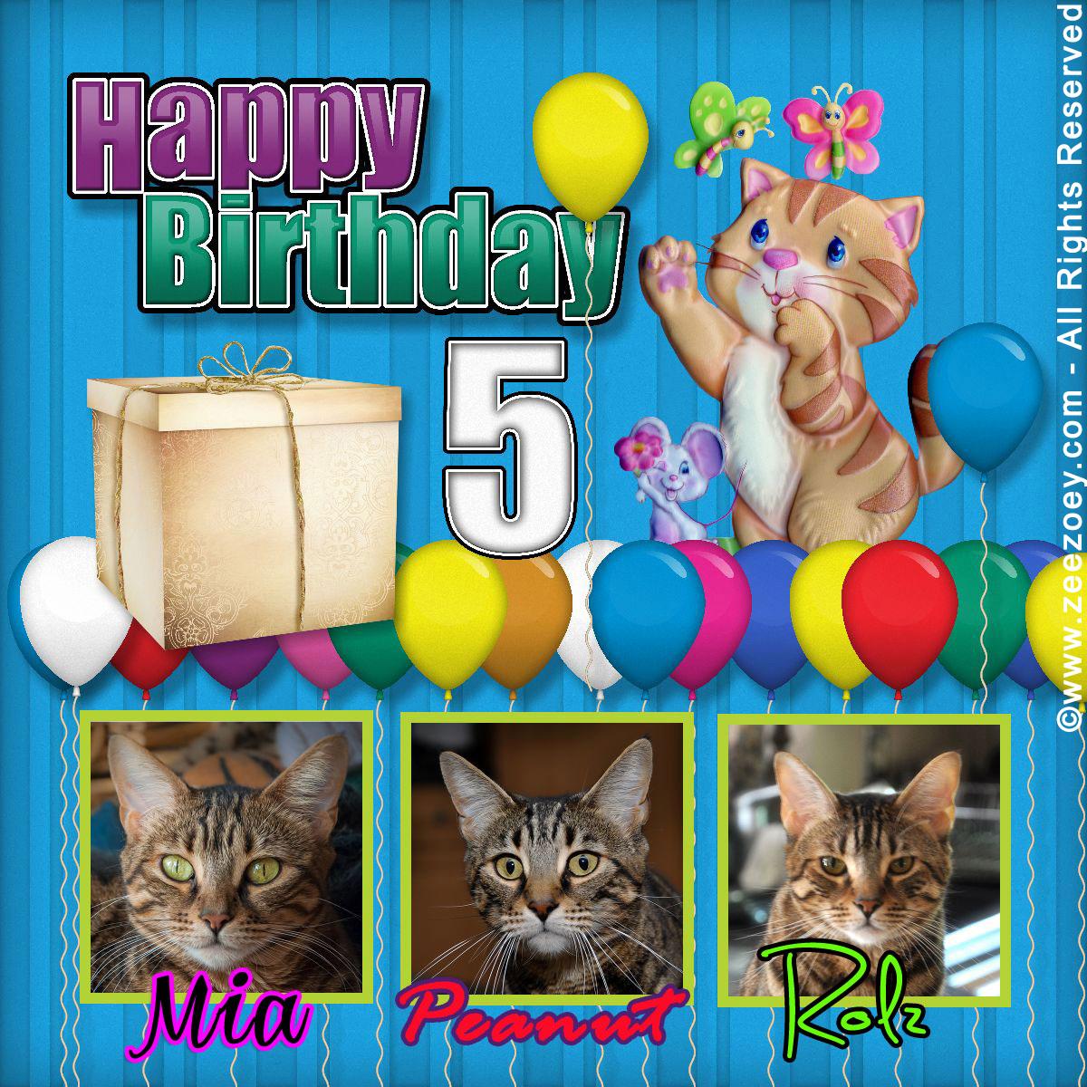 ZeeZoey Kittens5BD