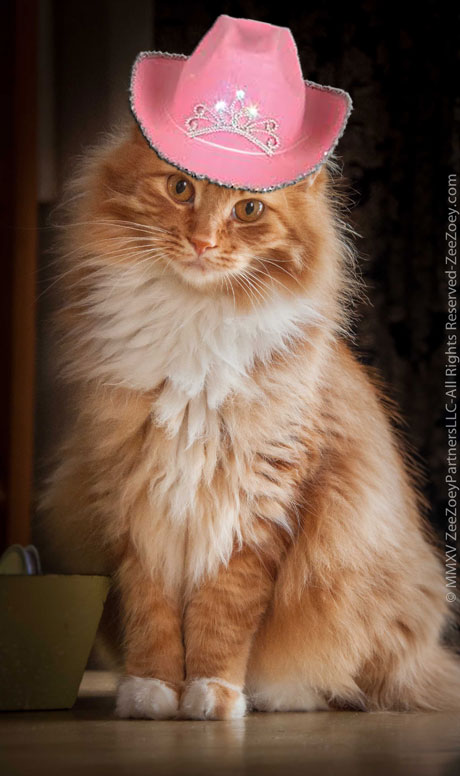 Jazmine the ginger cat from Zee & Zoey's Cat Chronicles wears a hat for Dr. Seuss Read Across America Day!