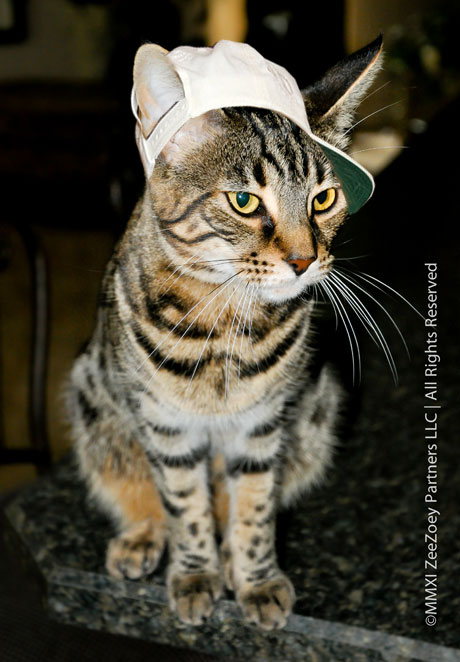Peanut the cat from Zee & Zoey's Cat Chronicles wears a hat for Dr. Seuss Read Across America Day!
