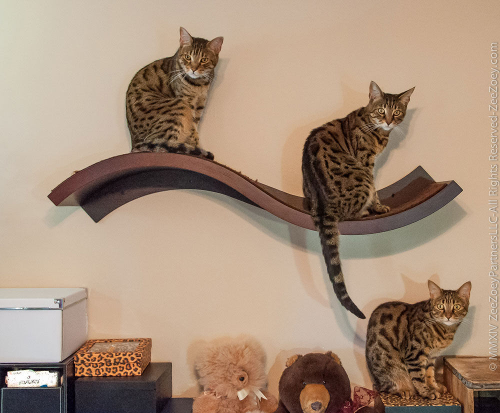 Catify your home with the sophisticated wave perch from urban pet cats on wave amipublicfo Images