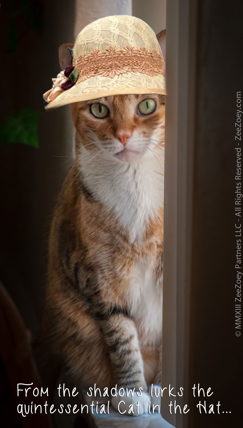 Harley the rescue cat from Zee & Zoey's Cat Chronicles wears a hat for Dr. Seuss Read Across America Day!
