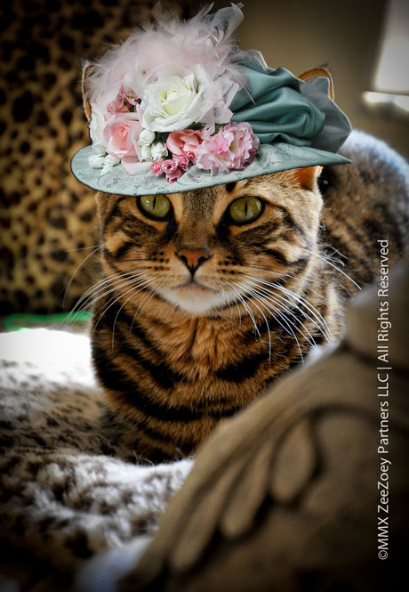 Mia the cat from Zee & Zoey's Cat Chronicles wears a hat for Dr. Seuss Read Across America Day!