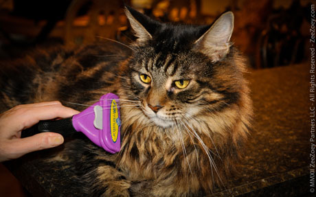 The FURminator deShedding tool is available for long and short haired cats