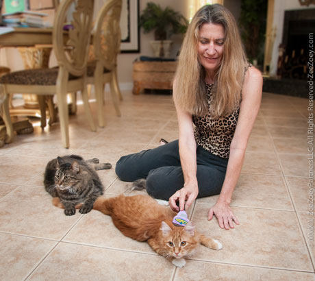 Grooming the FURminator helps to bond with your cat