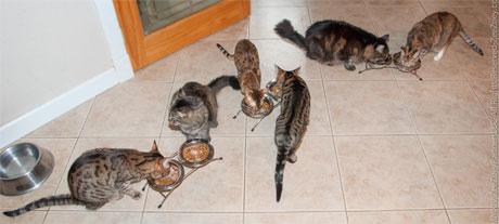 Feeding7