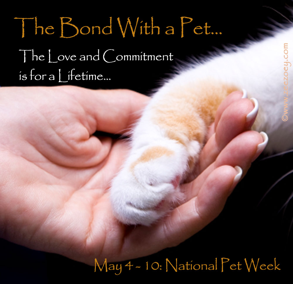 May The 4th Be With You Cat: 10th: Be Kind To Animals Week And National Pet