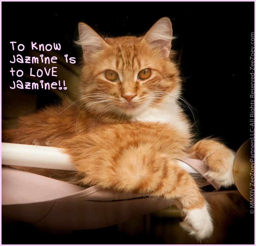 know-jazmine